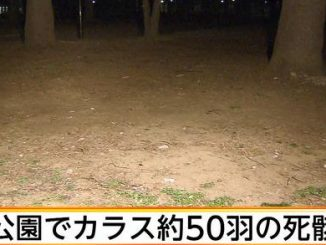 Police believe 50 dead crows could have been deliberately poisoned at Toritsu Johoku Central Park
