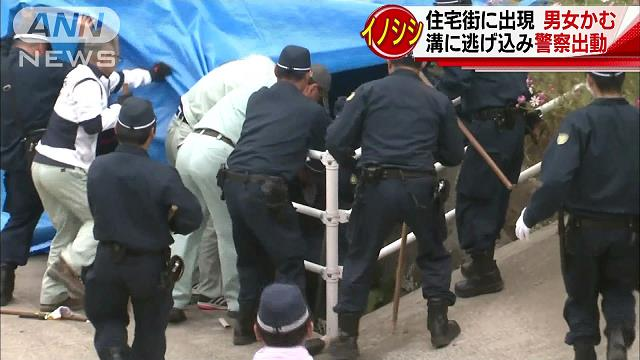 Authorities put down a wild boar that attacked and injured two pedestrians in Sasebo City on Sunday