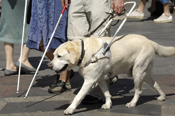 A cab driver in Kanazawa refused a man with a guide dog