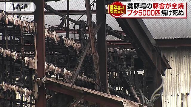 Two pigpens burned down at a pig farm in Saijo City on Tuesday