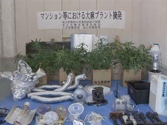 Saitama police marijuana