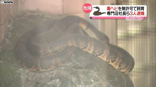 Tokyo police busted a pet store in Taito Ward for raising poisonous snakes without a license