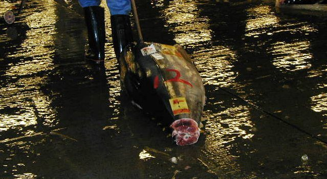 A frozen tuna on the pavement